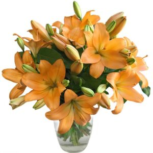 Amber Lilies